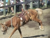 rock-creek-rodeo-2011-iiii